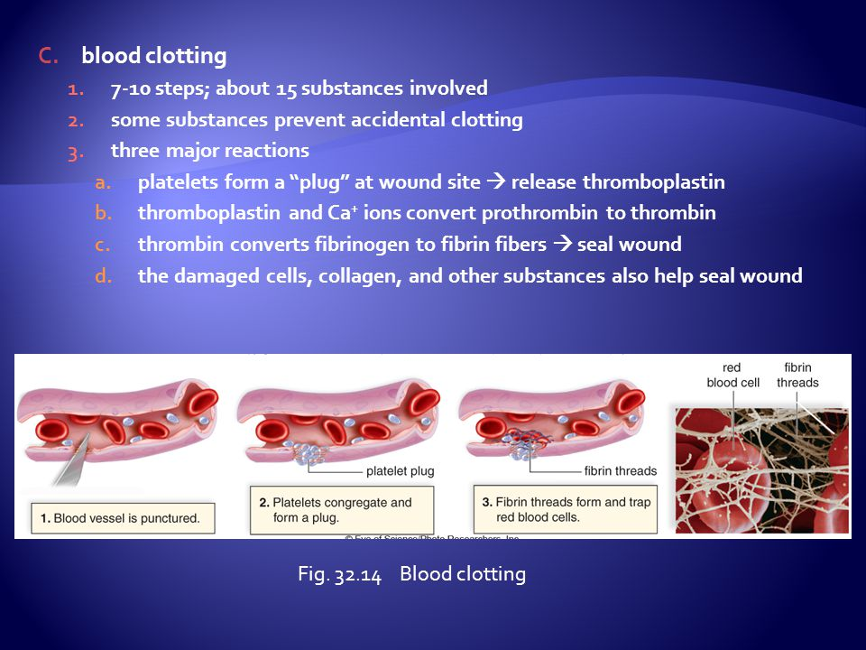 blood clotting 7-10 steps; about 15 substances involved