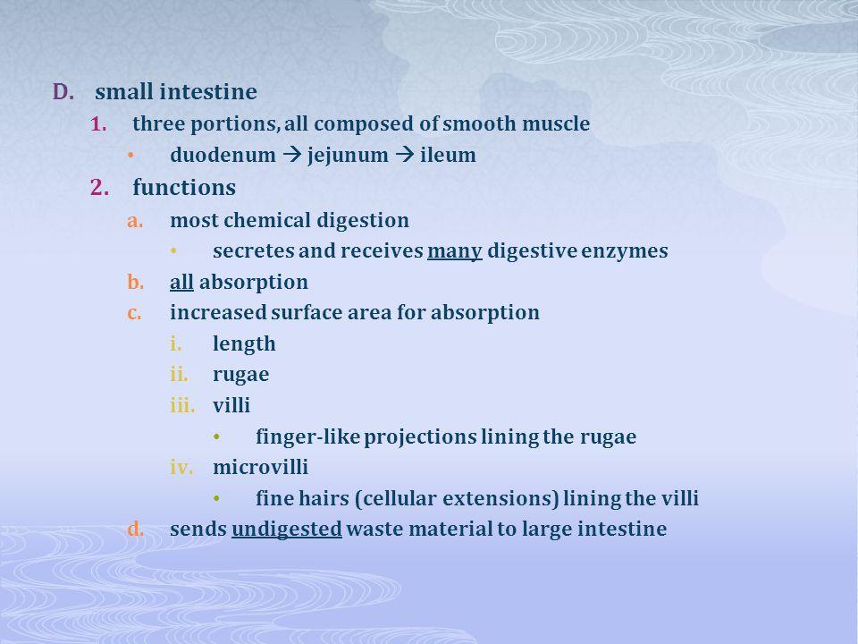 small intestine functions