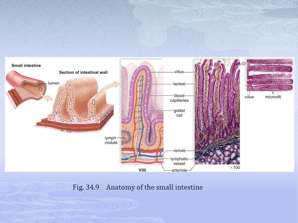 Fig. 34.9 Anatomy of the small intestine