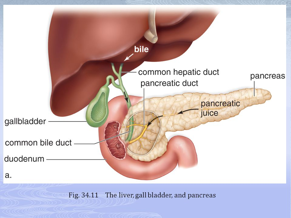 Fig. 34.11 The liver, gall bladder, and pancreas