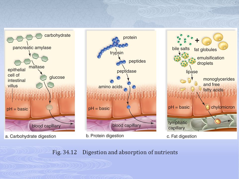 Fig. 34.12 Digestion and absorption of nutrients