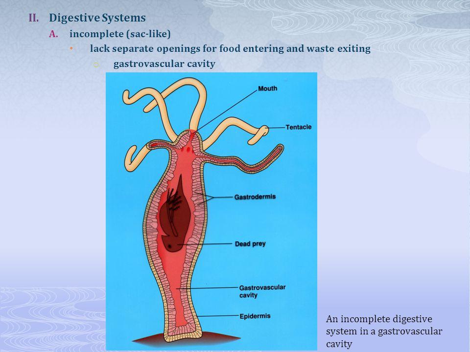 Digestive Systems incomplete (sac-like)