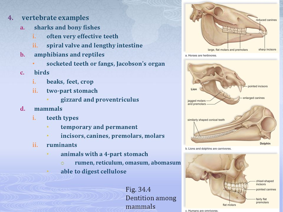 Dentition among mammals