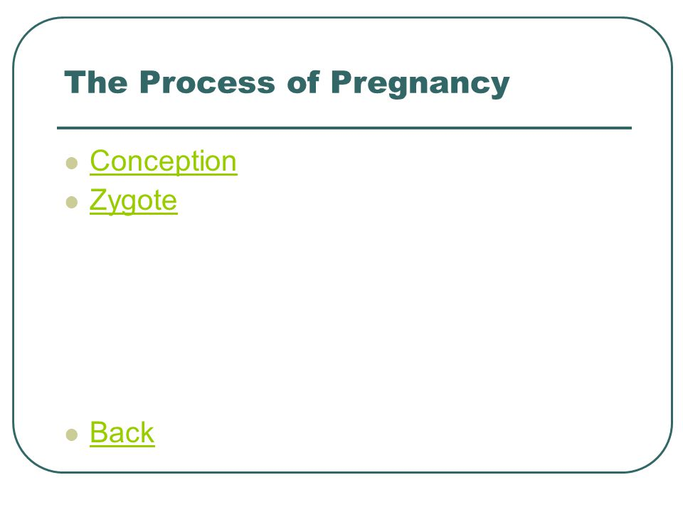 The Process of Pregnancy