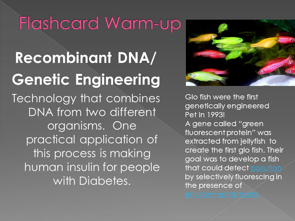 Flashcard Warm-up Recombinant DNA/ Genetic Engineering