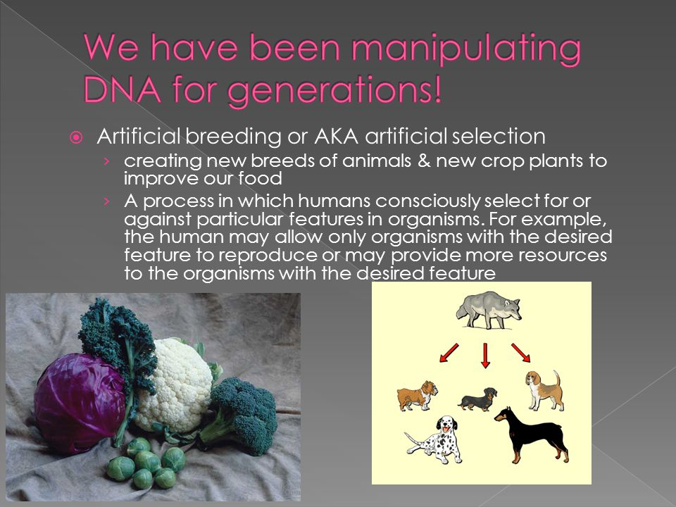 We have been manipulating DNA for generations!