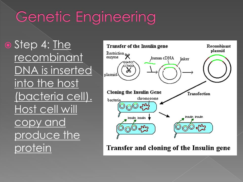 Genetic Engineering Step 4: The recombinant DNA is inserted into the host (bacteria cell).