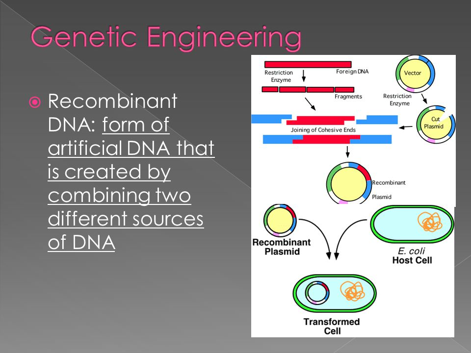 Genetic Engineering Recombinant DNA: form of artificial DNA that is created by combining two different sources of DNA.