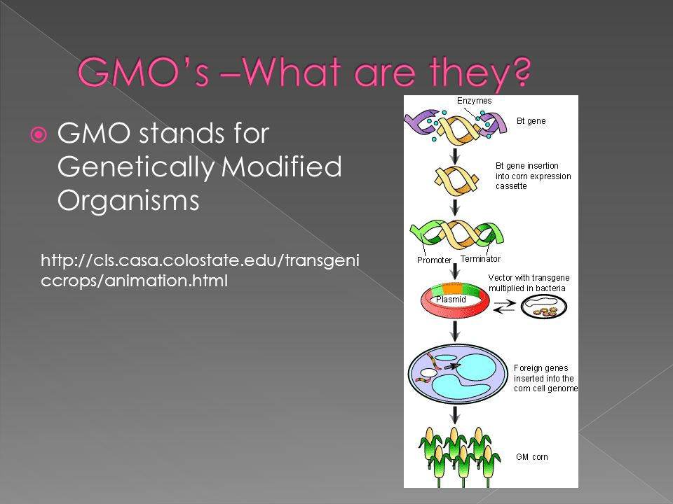 GMO's –What are they GMO stands for Genetically Modified Organisms