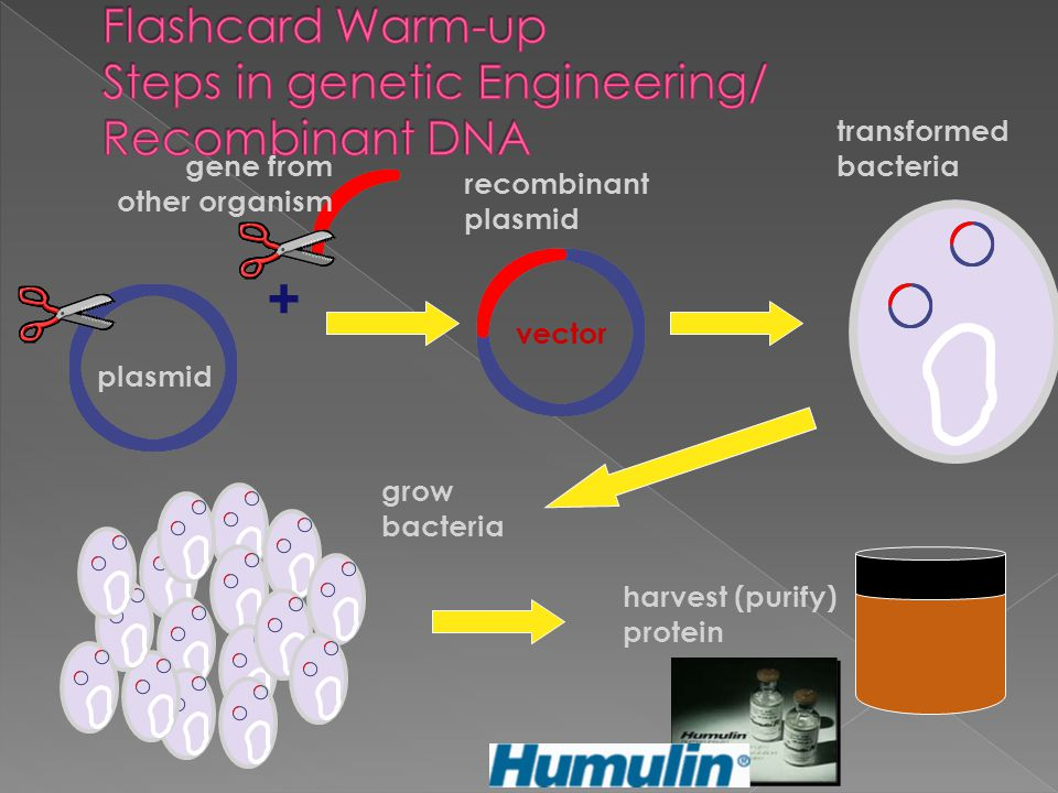Flashcard Warm-up Steps in genetic Engineering/ Recombinant DNA