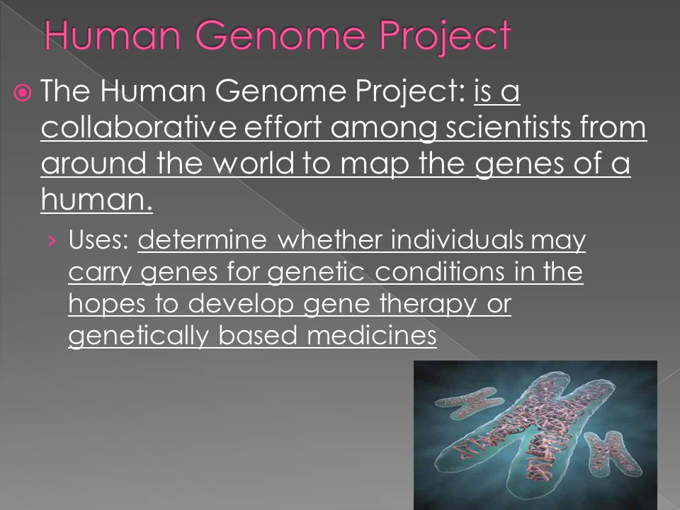 Human Genome Project The Human Genome Project: is a collaborative effort among scientists from around the world to map the genes of a human.