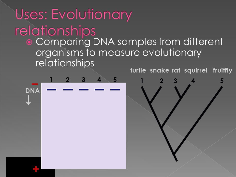 Uses: Evolutionary relationships