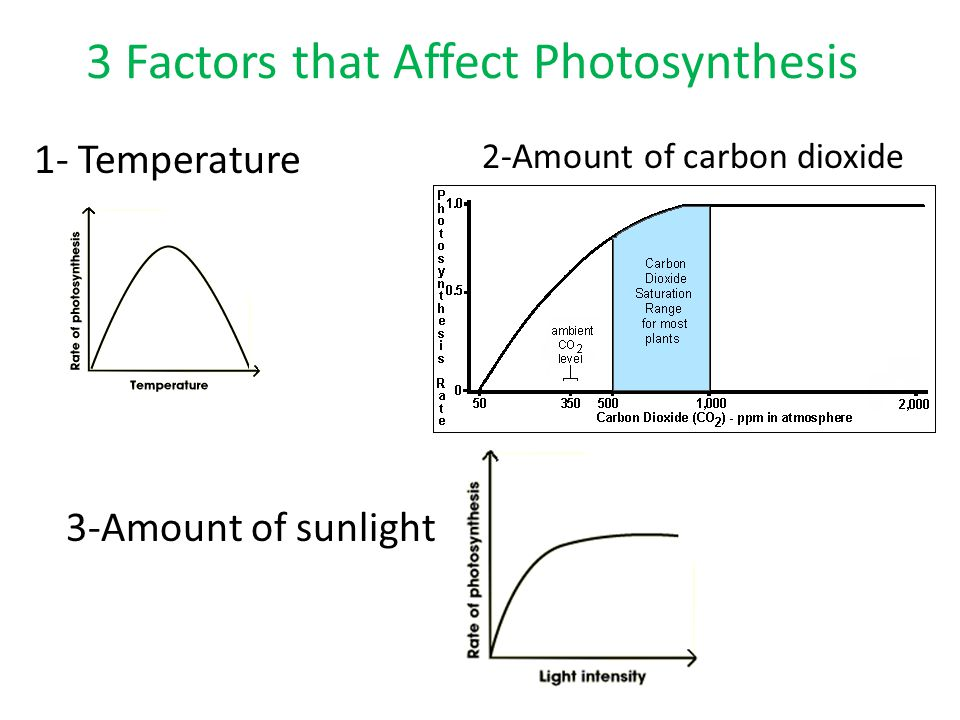 3 factors that affect the rate of photosynthesis By understanding the factors that affect the rate of photosynthesis they can do work to try the three main things affecting the rate of photosynthesis are: 1.