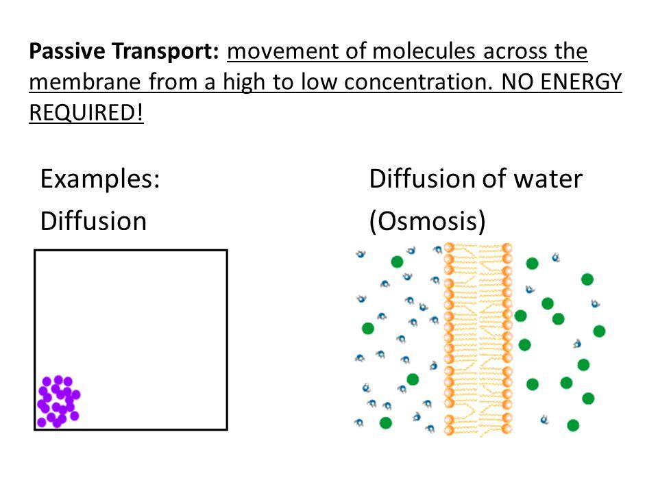Examples: Diffusion of water Diffusion (Osmosis)