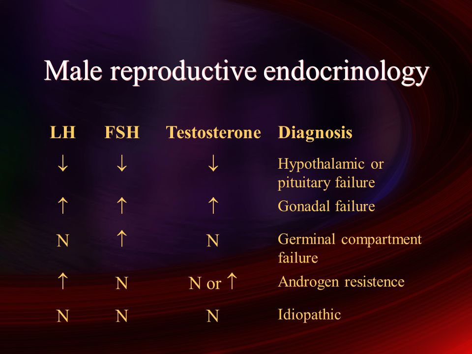 Male reproductive endocrinology