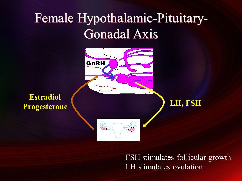 Female Hypothalamic-Pituitary-Gonadal Axis