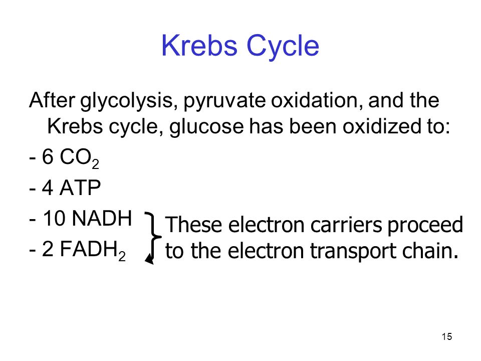 Krebs Cycle After glycolysis, pyruvate oxidation, and the Krebs cycle, glucose has been oxidized to: