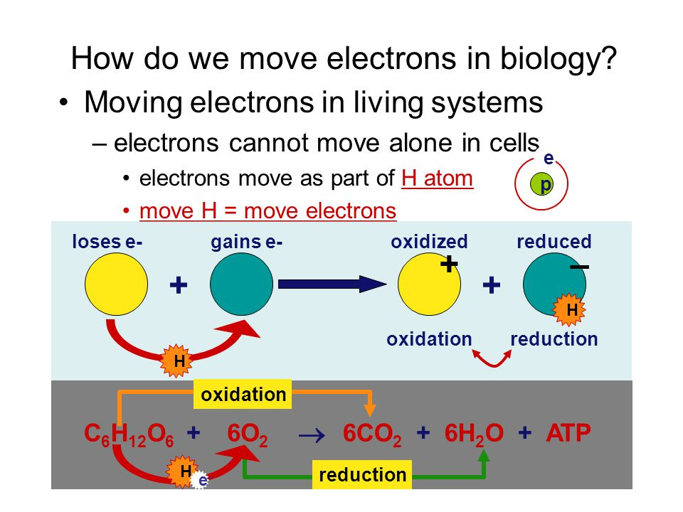 How do we move electrons in biology