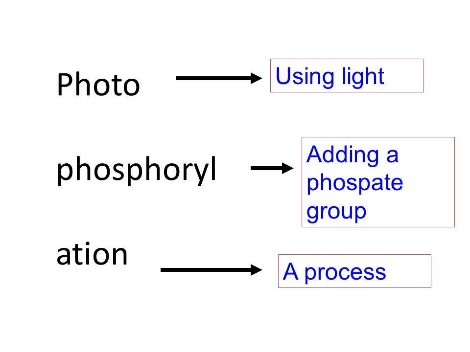 Photo phosphoryl ation