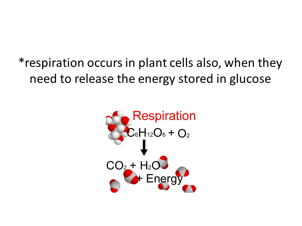 *respiration occurs in plant cells also, when they need to release the energy stored in glucose