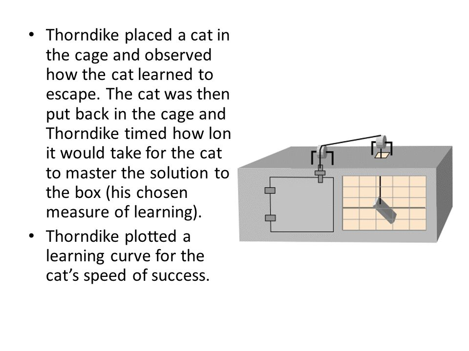 Thorndike placed a cat in the cage and observed how the cat learned to escape. The cat was then put back in the cage and Thorndike timed how long it would take for the cat to master the solution to the box (his chosen measure of learning).