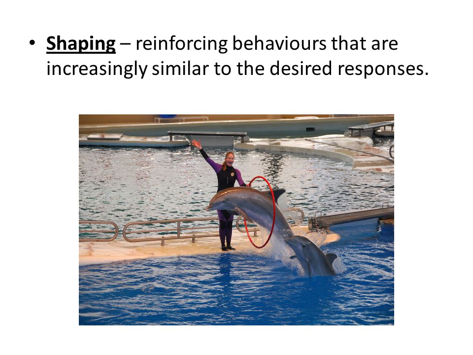Shaping – reinforcing behaviours that are increasingly similar to the desired responses.