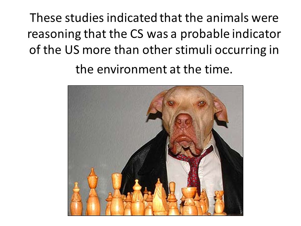 These studies indicated that the animals were reasoning that the CS was a probable indicator of the US more than other stimuli occurring in the environment at the time.