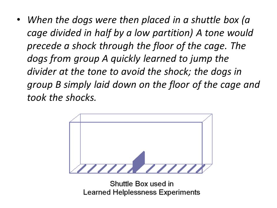 When the dogs were then placed in a shuttle box (a cage divided in half by a low partition) A tone would precede a shock through the floor of the cage.