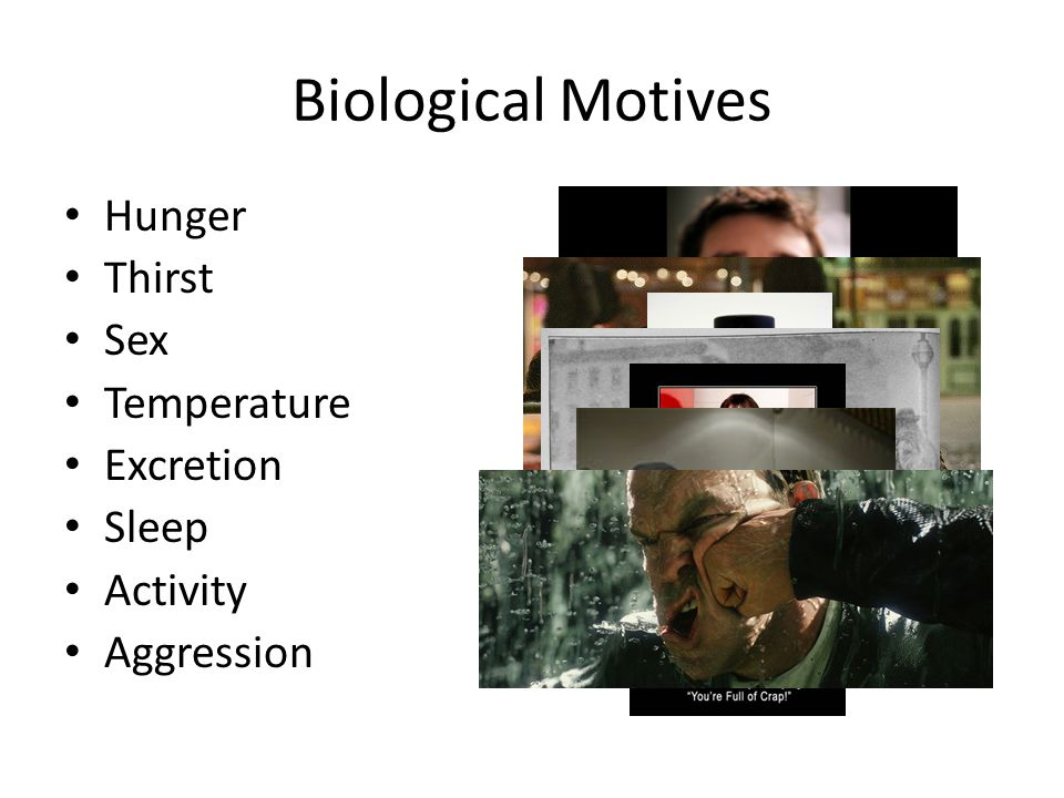 Biological Motives Hunger Thirst Sex Temperature Excretion Sleep