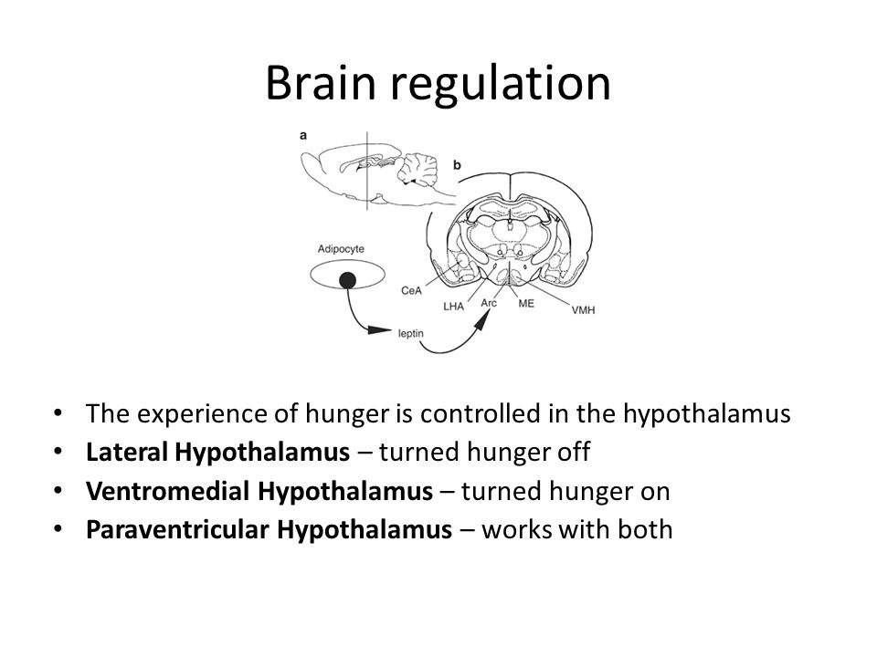 Brain regulation The experience of hunger is controlled in the hypothalamus. Lateral Hypothalamus – turned hunger off.