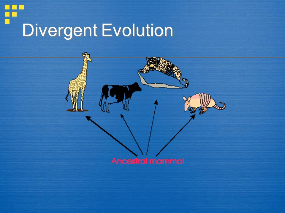 convergent evolution occurs when different organisms that