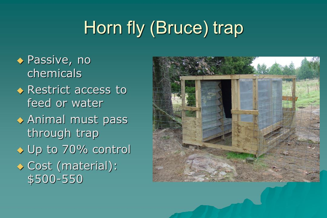 Horn fly (Bruce) trap Passive, no chemicals