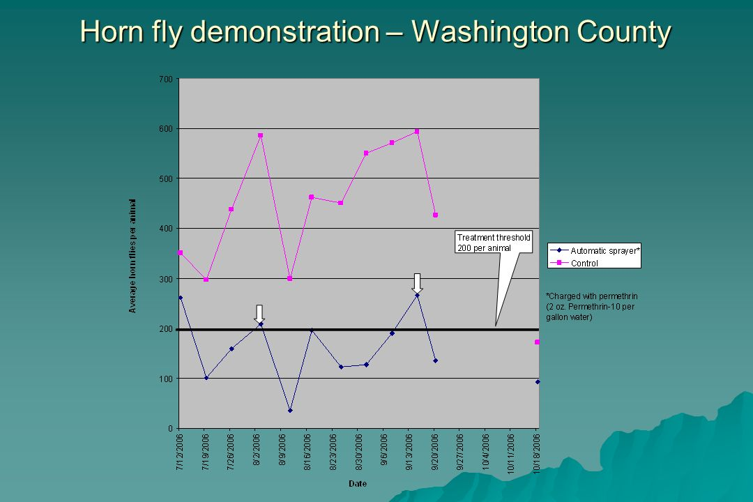 Horn fly demonstration – Washington County