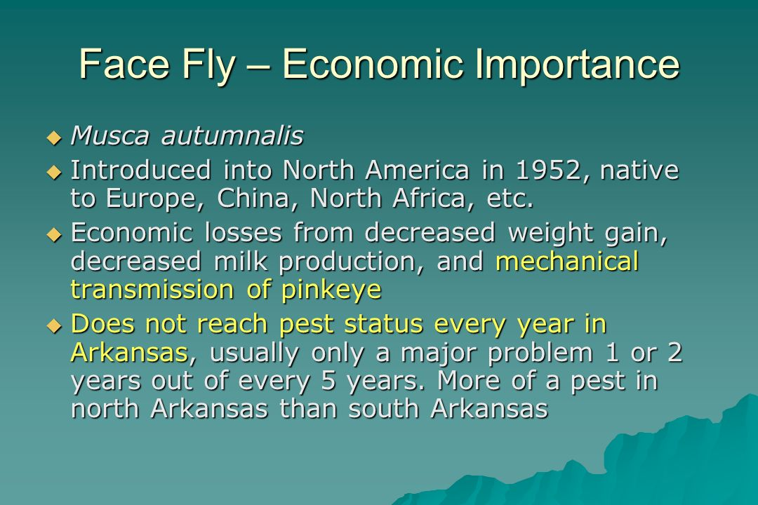 Face Fly – Economic Importance