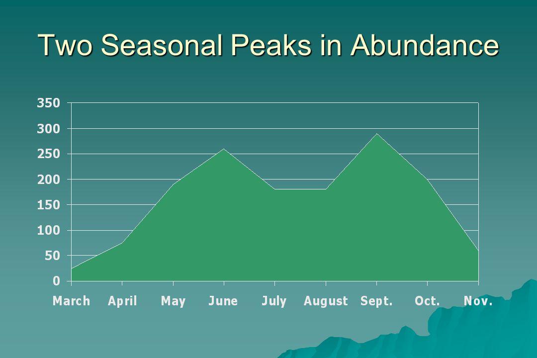 Two Seasonal Peaks in Abundance