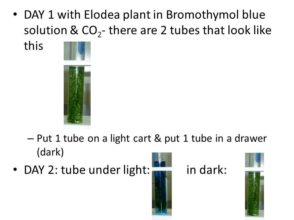 DAY 2: tube under light: in dark: