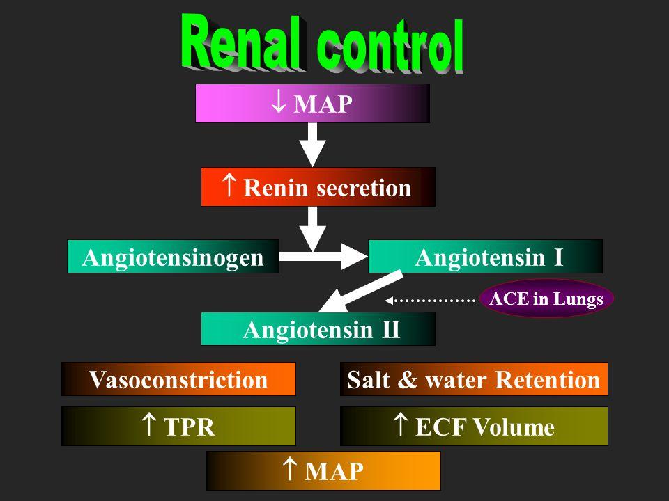 Renal control  MAP  Renin secretion Angiotensinogen Angiotensin I