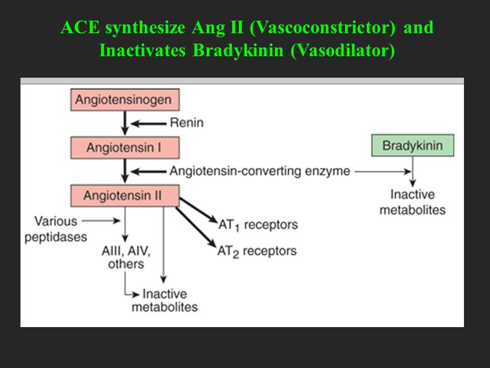 ACE synthesize Ang II (Vascoconstrictor) and Inactivates Bradykinin (Vasodilator)