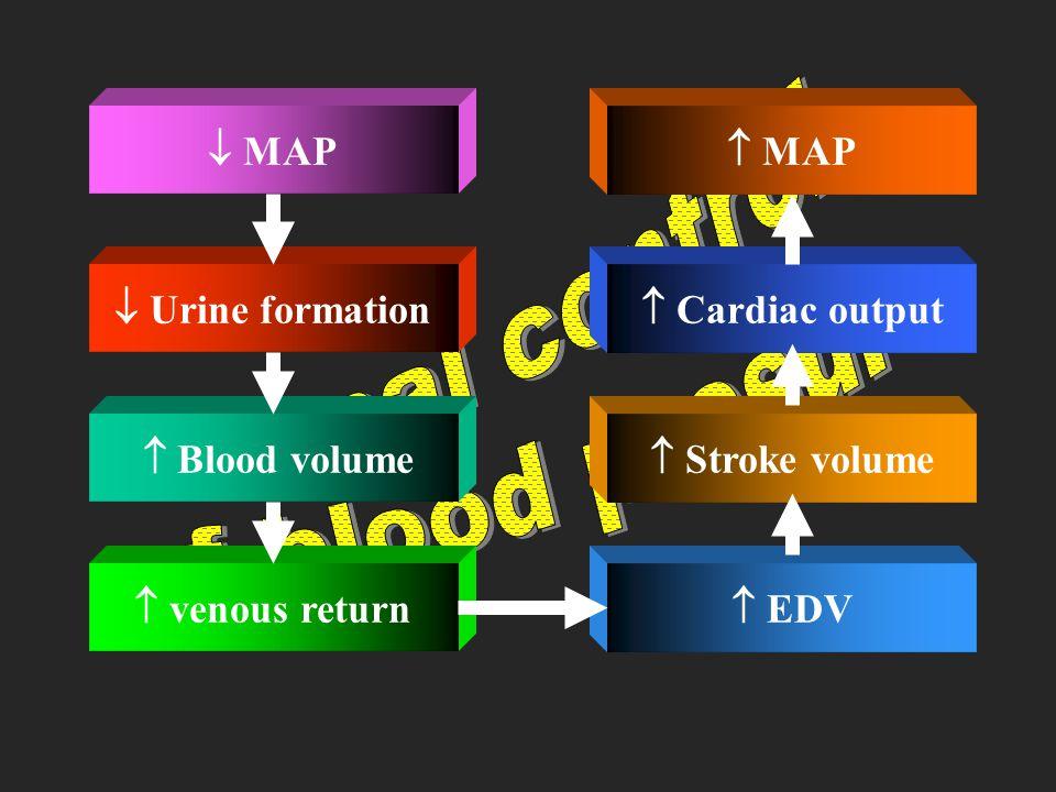Renal control of blood presure