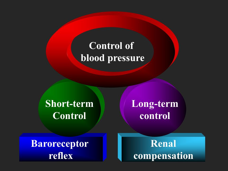 Control of blood pressure. Short-term. Control. Long-term. control. Baroreceptor. reflex. Renal.