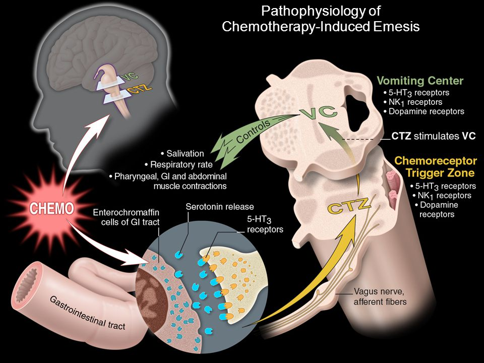 Pathophysiology of Chemotherapy-Induced Emesis
