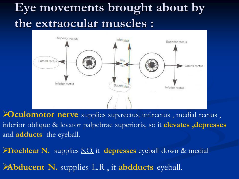 Eye movements brought about by the extraocular muscles :