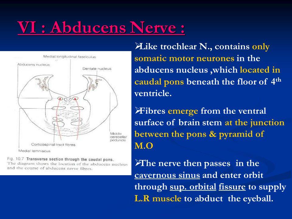 VI : Abducens Nerve :