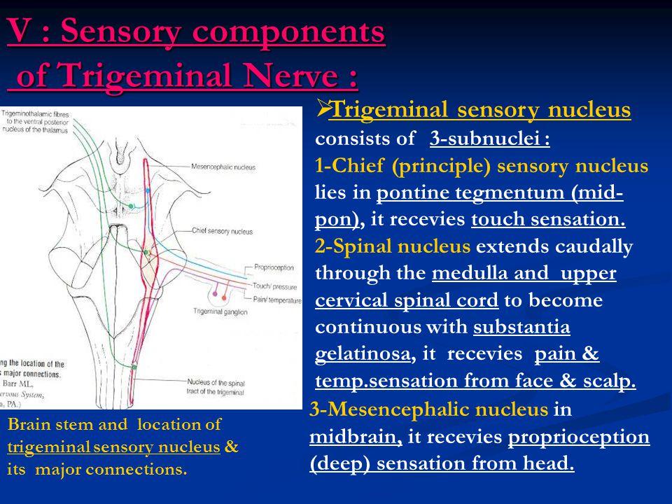 V : Sensory components of Trigeminal Nerve :