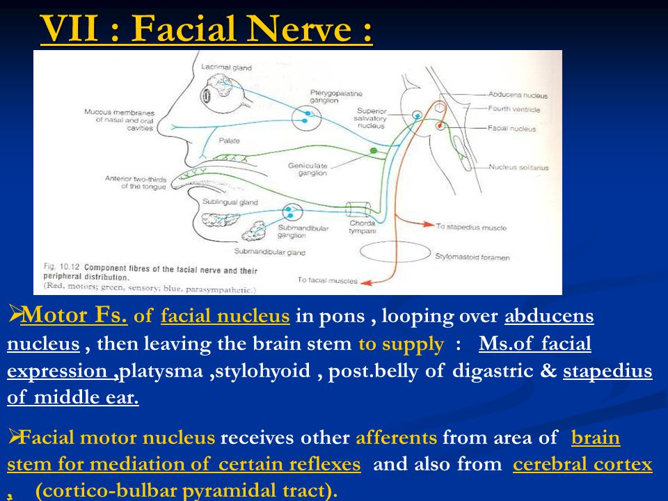 VII : Facial Nerve :