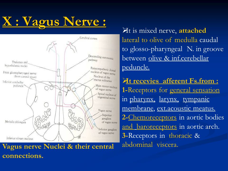 X : Vagus Nerve :