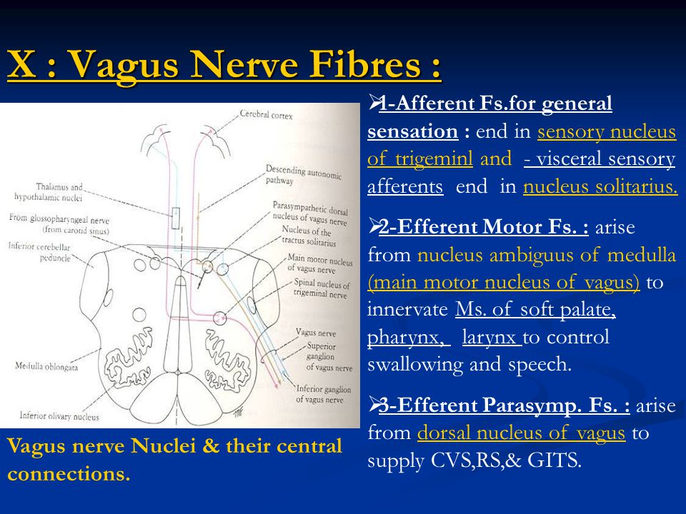 cranial nerves  u0026 cranial nerve nuclei