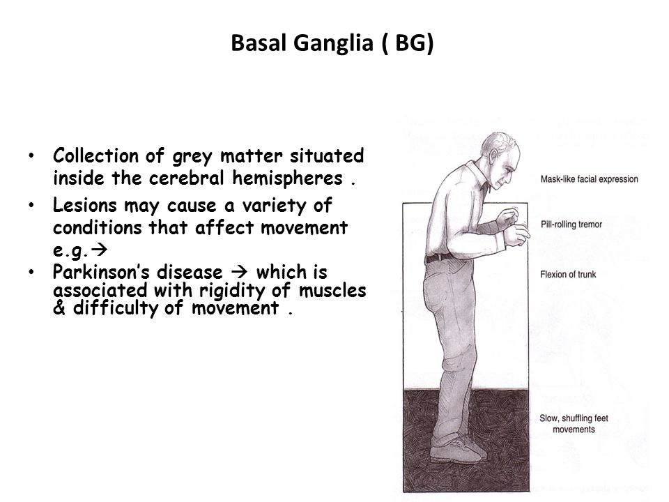 Basal Ganglia ( BG) Collection of grey matter situated inside the cerebral hemispheres .