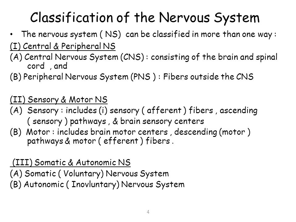 Classification of the Nervous System