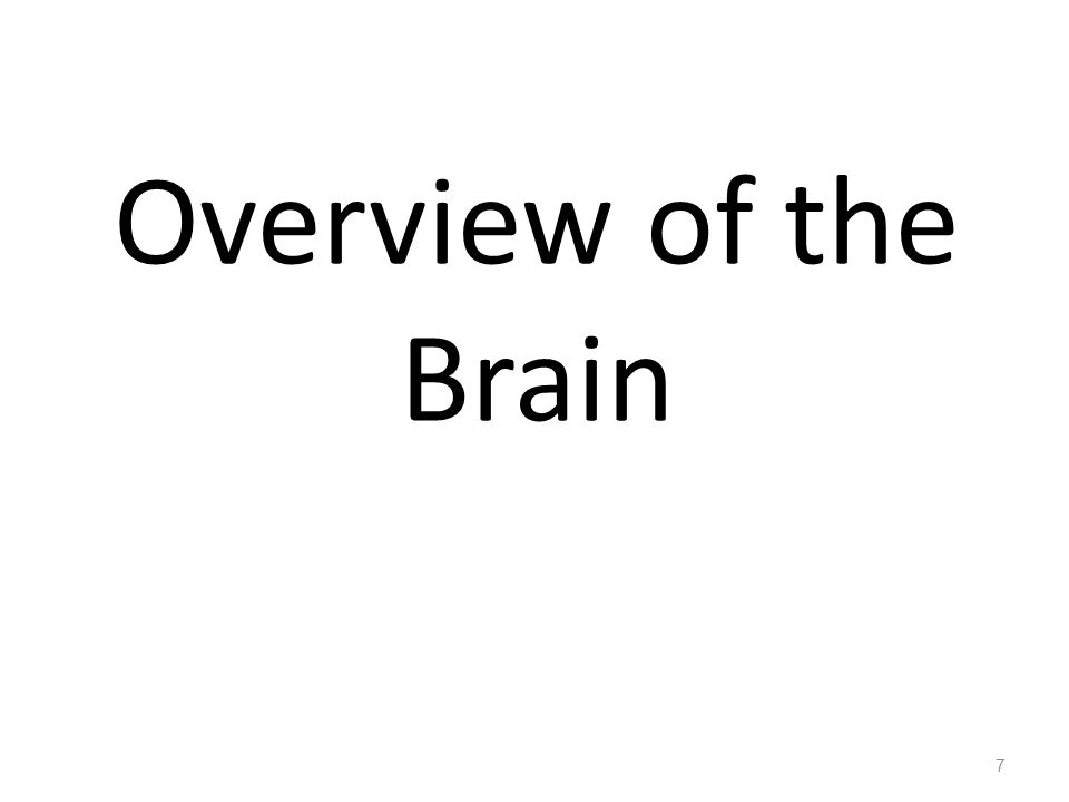 Overview of the Brain